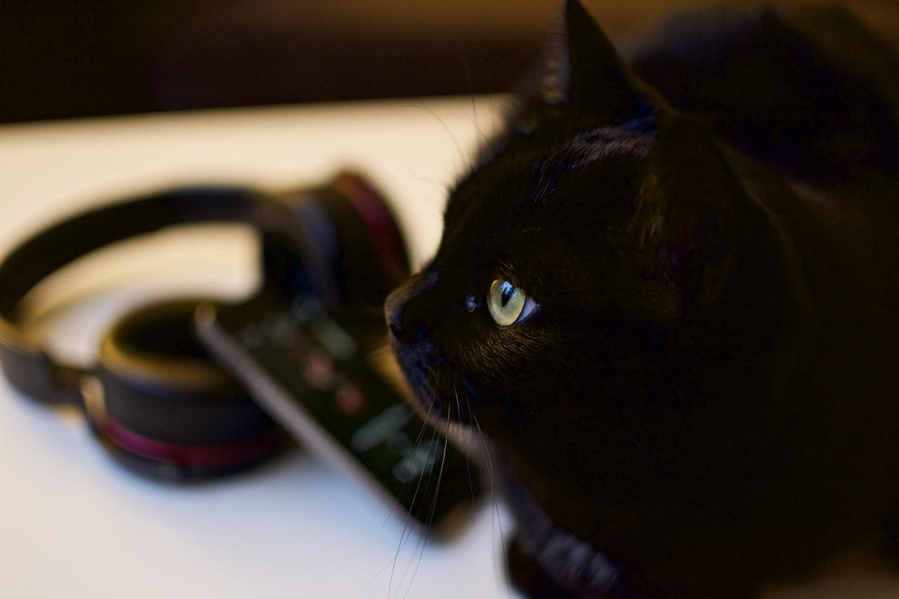 Bonusbild på Svea som var intresserad av min photoshoot. Och sedan blev mer intresserad av en fågel utanför fönstret.